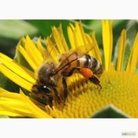 Куплю мёд без антибиотика от 2 тонн по всей Украине