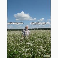 Семена гречихи GRANBY Канадский трансгенный сорт