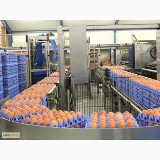 Тара и упаковка для яиц