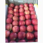 Продаем оптом яблоко