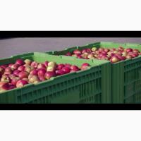 Предлагаем на продажу яблоки из Польши