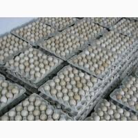 Продам яйце інкубаційне бройлер Росс-308