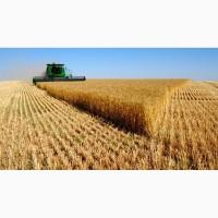 Куплю пшеницу разных фракций по всем регионам дорого