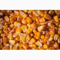 Закупаем некондиционную кукурузу