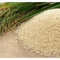 Продам рис сорт Османджик, Виконт урожай 2018 г