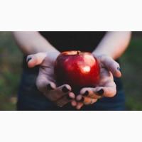 Продам яблука гуртом із власного саду по доступній ціні