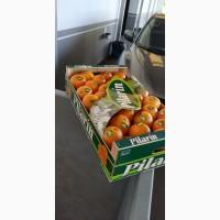 Мандарины и апельсины из Испании. Прямые поставки