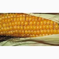 Семена Кукурузы Канадской селекции Джи Хост(G Host) и другие