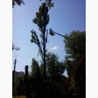 Зрізання обрізка дерев Подрібнення гілок Розчищення ділянок Демонтаж