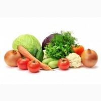 Купим молодые овощи оптом 2020