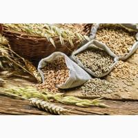 Пшеница, кукуруза, соя, подсолнечник. Закупка дорого