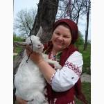 Козье молоко домашнее самое целебное и органическое в Украине-пища богов и долгожителей
