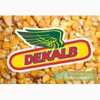 Продам семена кукурузы Монсанто ДК 391