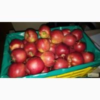 Яблоки из Польши - продажа