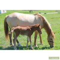 Продам несколько лошадей от 3 000 грн