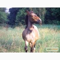 Продам лошадь (лошаденок)