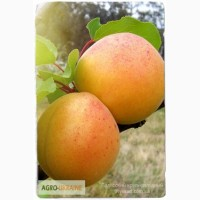 Купить саженцы плодовых деревьев - лучшие сорта почтой по Украине