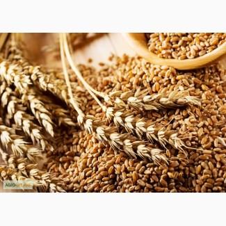 Продаем СЗР для зерновых по демократичным ценам