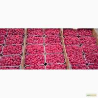 Продажа Малина саженцы сорта Атлант полана Зюгана еще 15 сортов