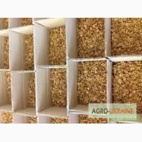 Принимаем заказы на оптовые поставки ядра ореха грецкого нового сезона