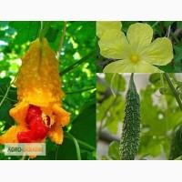 Семена экзотических растений для огорода