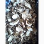 Продам сушеные белые грибы хорошего качества