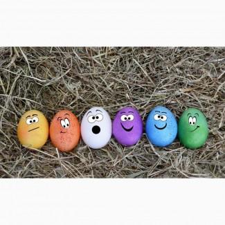 Продам куриное яйцо С1, С2 мелким, крупным оптом на и внутренний рынок