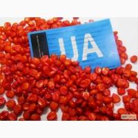Семена кукурузы среднеранние Оржиця 237 МВ ФАО – 240