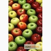 На постоянной основе покупаем яблоко оптом