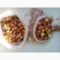 Продается лук-севок (арбажик, тыканка)