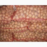Продам картофель бюджетный
