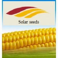 Семена кукурузы Ален Солар Сидс, ФАО 250 Франция