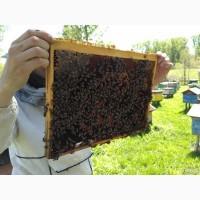 Продам пчелопакеты, бжолопакеты