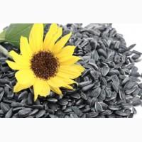 Семена подсолнуха импортной и отечественной селекции. Полтава