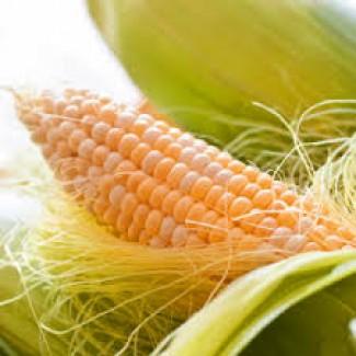 Посевной материал Кукуруза Кристель (Евралис)
