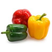 Продам перец сладкий ОПТ, СОРТ КЛАУДИА, желтый/красный/зеленый