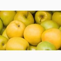 Продам якісні сортові яблука оптом