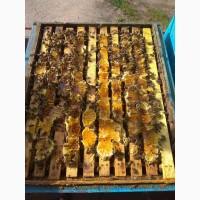 Бакфаст бджолосімї