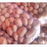 Продам картошку сорт бела роса