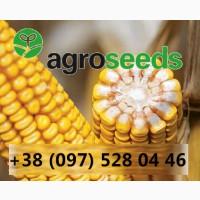 Семена. Гибриды кукурузы. Агротрейд / Agroseeds - Сумская область