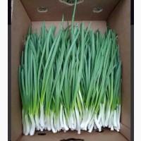 Куплю зелёный лук