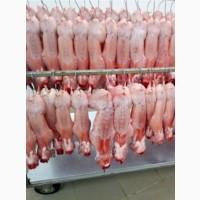 Продам мясо тушки кролика