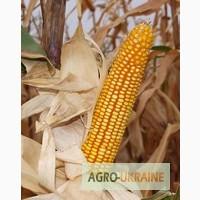 Семена кукурузы Гарантия, Танго, Слобожанский, Лелека