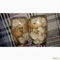 Карпатские белые маринованные грибы 2016 г