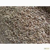 Семена суданской травы (кормовые травы)