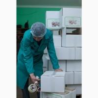 Ядро грецкого ореха, (Incoterms, export walnut), Cherkasy region Ukraine