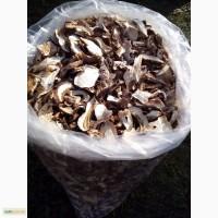 Продам белые грибы из Закарпатя
