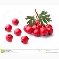 Куплю плоди глоду (бояришнік) в сирому вигляді