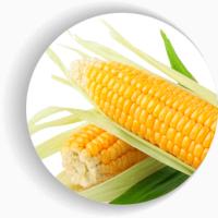 Семена кукурузы Мел 272 (Фао 250)