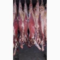 Продам говяжьи полутуши охлажденные